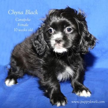 chyna black puppy love