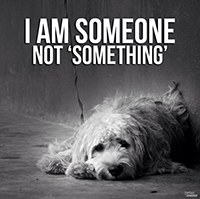 Dog I am someone